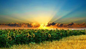 Озвучено новий формат доступу іноземців на український ринок землі