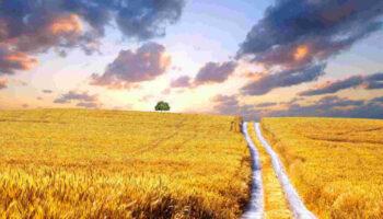 Погодні умови другої декади травня сприяли розвитку ранніх зернових в Україні