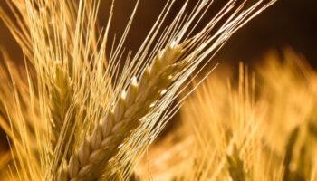 26 млн тонн зерна Украина поставила на внешние рынки
