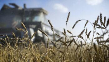 Прогнозы на урожай в Украине и уровень мировых цен