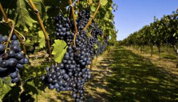 Виноделие в селах Украины: чиновники презентовали первый туристический гастромаршрут для европейцев