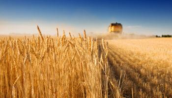 В Україні аграрії приступили до збирання врожаю