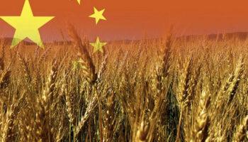 Китай запустив держпрограму по заміні хімдобрив на органічні